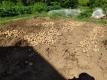 掘り出したジャガイモ