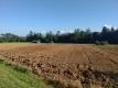 麦畑のトラクター