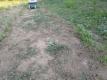 キバナコスモスの周り雑草を草取りした