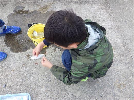 いいおかみなと公園釣り (17)