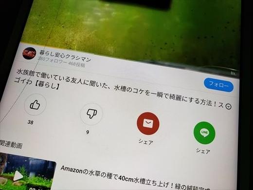 バズビデオ (10)
