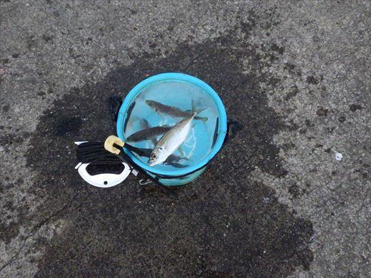 うみかぜ公園で五目釣り (13)