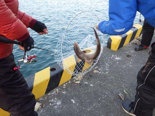 銚子漁港 (19)