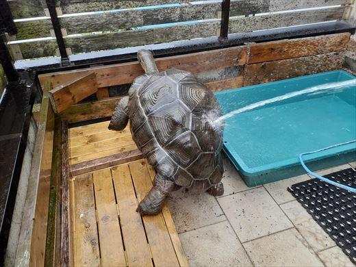 ゾウガメを外に出す (3)