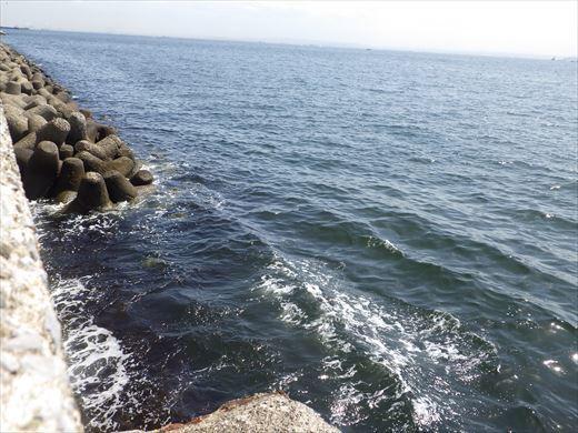 横浜で釣り (12)