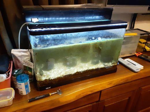 海水魚水槽再チャレンジ (4)