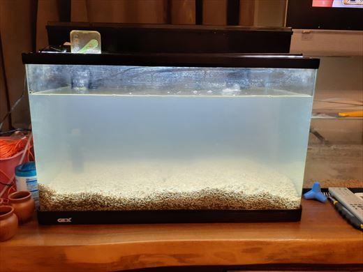 海水魚水槽再チャレンジ (17)