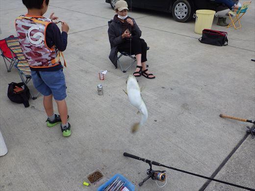久慈漁港で釣り (12)