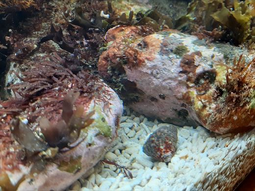 海水魚水槽立ち上げ直後 (3)