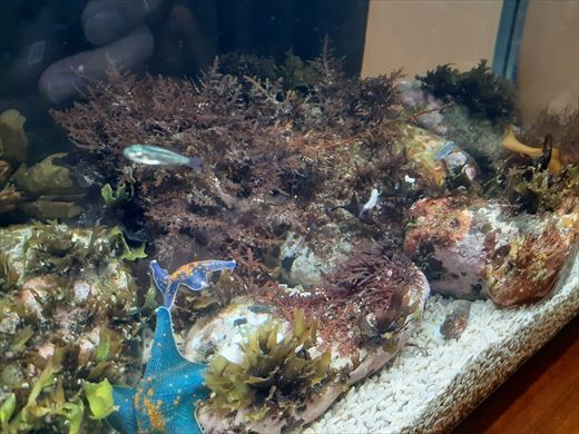 海水魚水槽立ち上げ直後 (2)