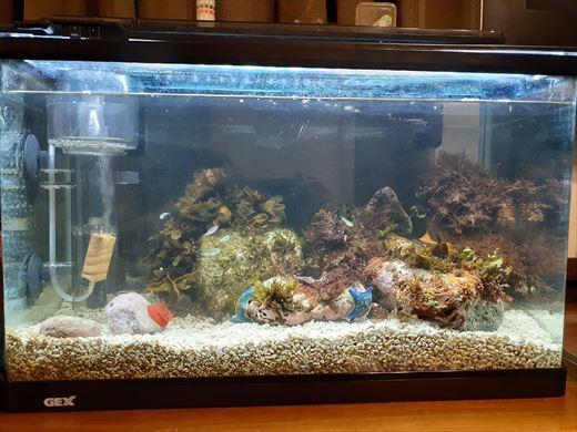海水魚水槽立ち上げ直後 (5)