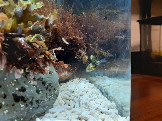 海水魚水槽立ち上げ直後 (4)