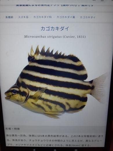 海水魚水槽立ち上げ直後 (11)