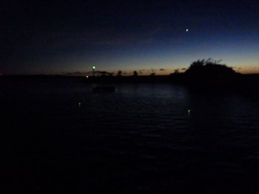 沖縄夜釣り (13)