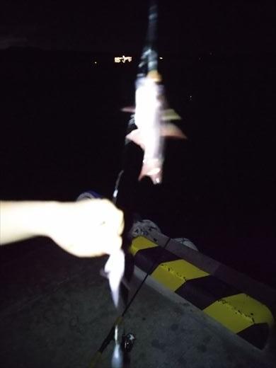 沖縄夜釣り (2)