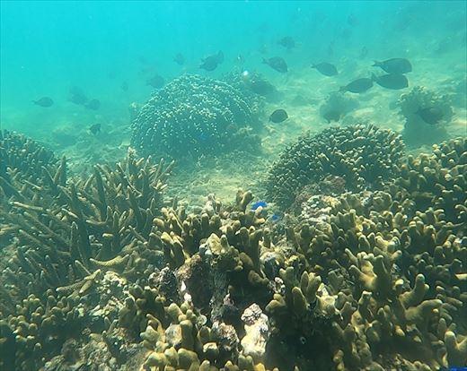 サンゴの海 (3)