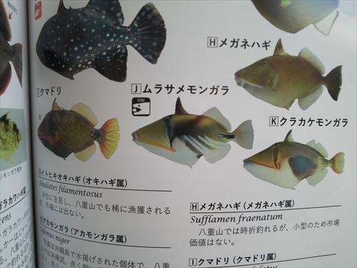 沖縄最終日は帰るだけ (12)