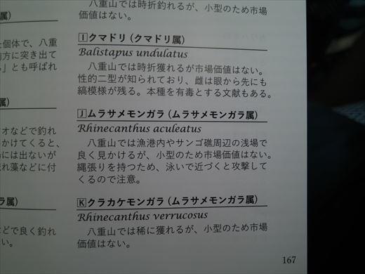 沖縄最終日は帰るだけ (13)