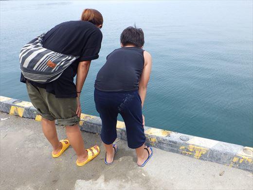 館山港で釣り (3)