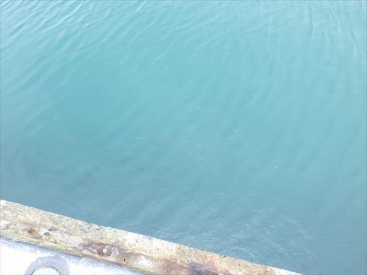 館山港で釣り (4)