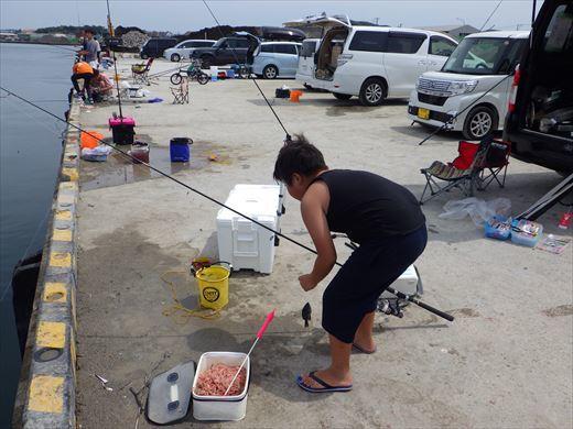 館山港で釣り (6)