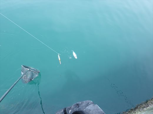 館山港で釣り (10)