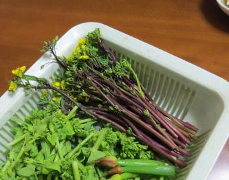 コウタイサイと菜花とネギ坊主