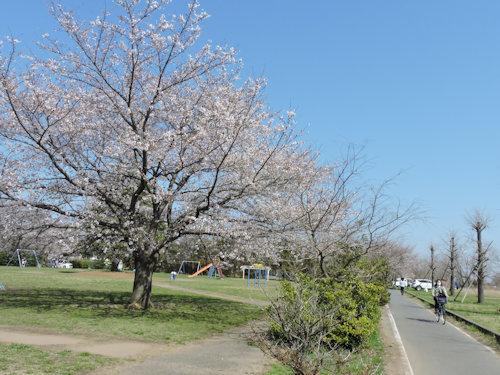 210324sakura01.jpg