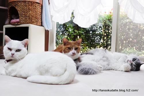 猫たちの集い