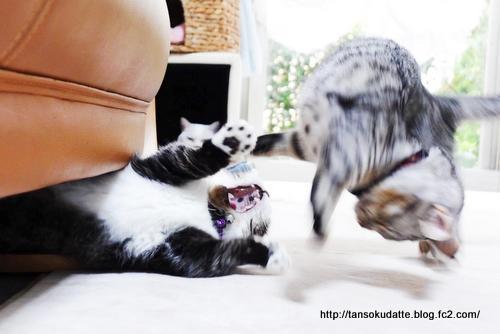 子猫の強気に先輩タジタジ!
