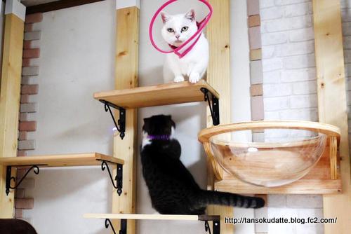 全集中?!で遊ぶ猫