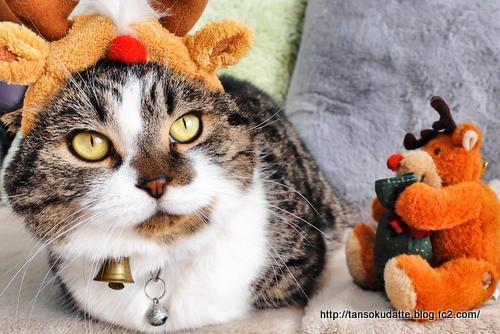 クリスマスパーティ?!
