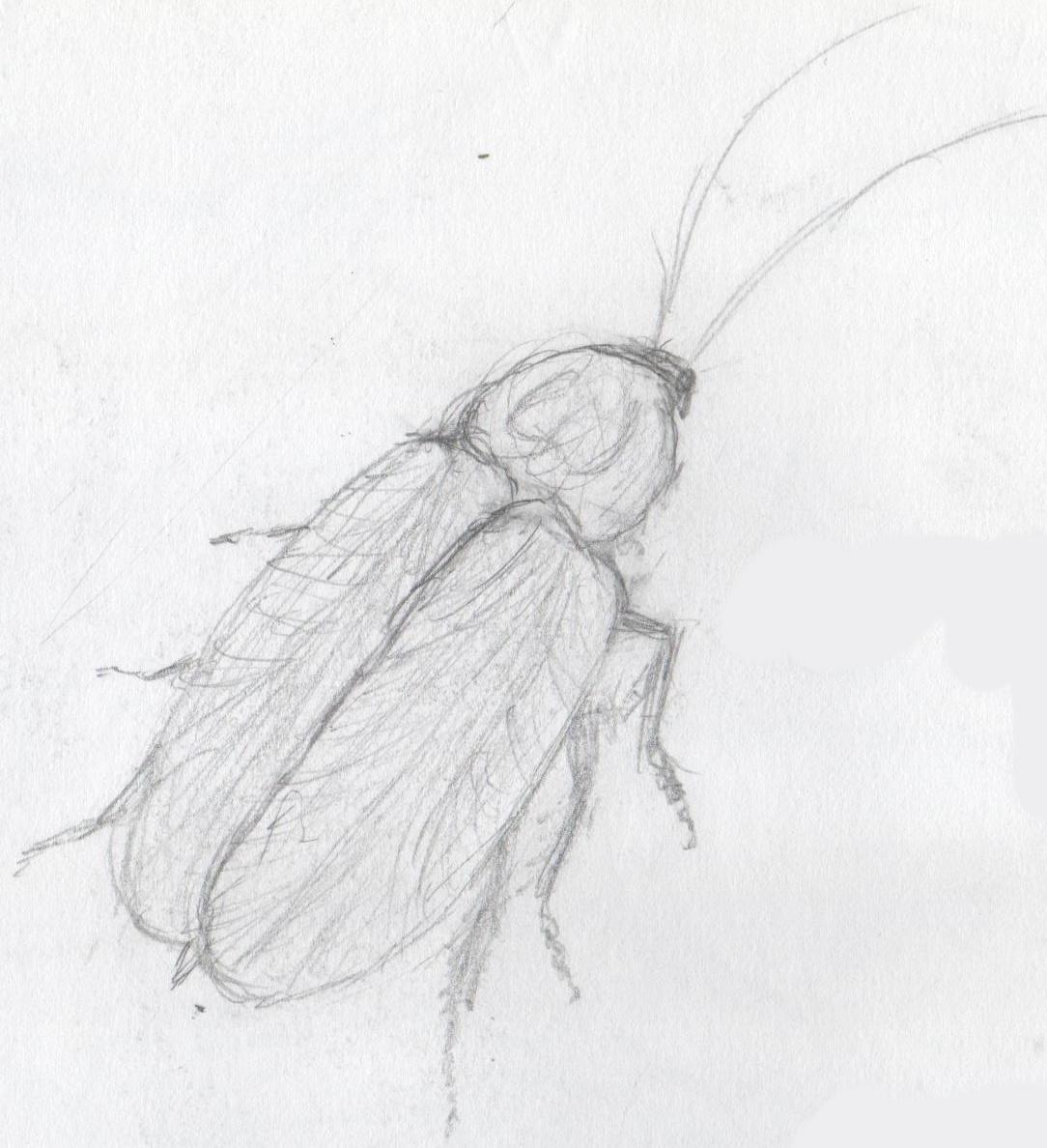 ゴキブリからカマキリ~昆虫の進化史~ - たてぃとぅてといろいろ趣味 ...