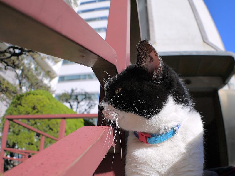 横を向いてる白黒猫1