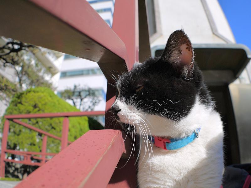 横を向いてる白黒猫2