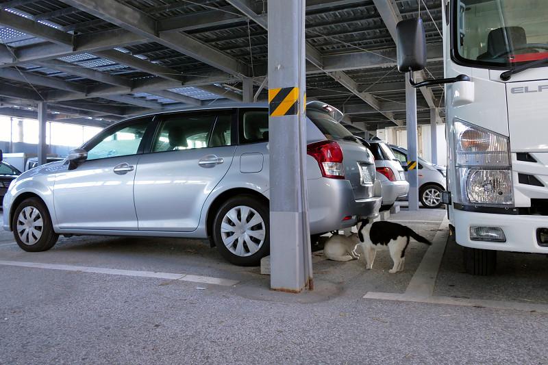 ガレージで怒る黒白猫3
