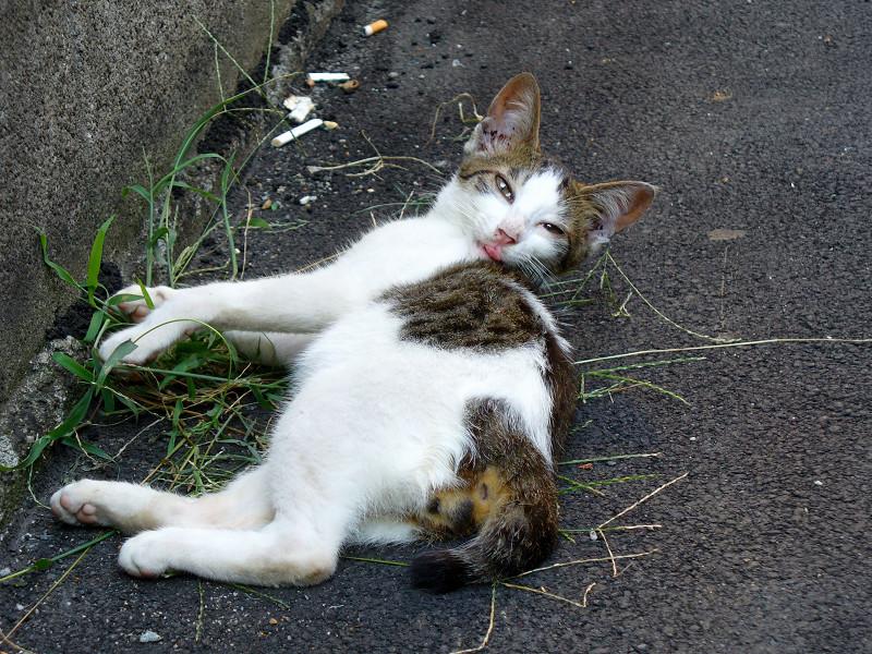 背中を舐める白キジ猫2