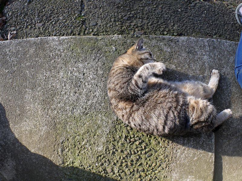 右パンチのキジトラ猫1