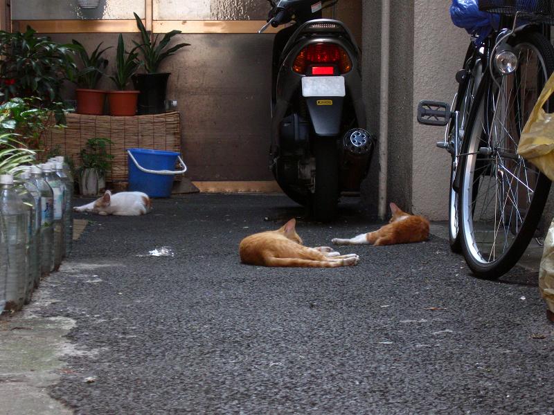 路地奥玄関先の猫たち1