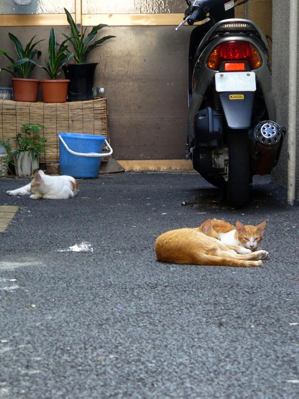 路地奥玄関先の猫たち2