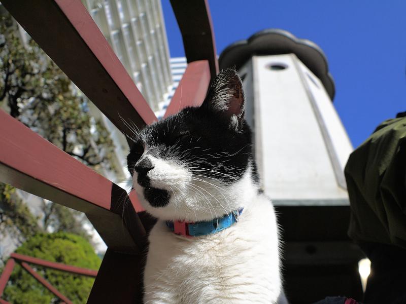 斜め横を向いてる白黒猫1