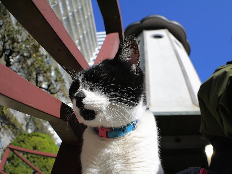 斜め横を向いてる白黒猫2