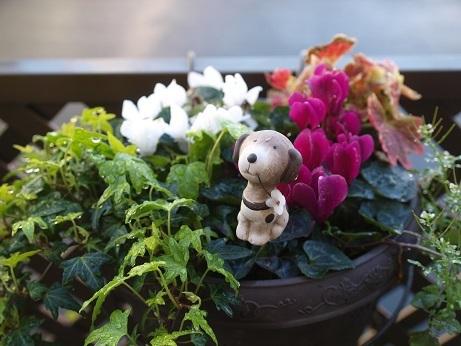 P3290019花と犬