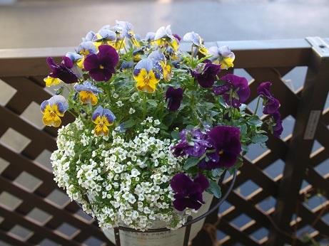 P3290017花その4