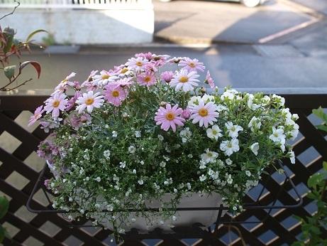 P3290015花その5