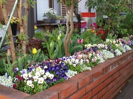 P3290002花壇の花