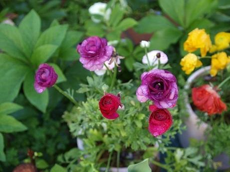 P3290030これがいい花