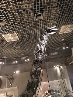 国立科学博物館_03