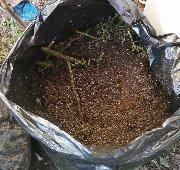 トマト堆肥2IMG_20201114_093017