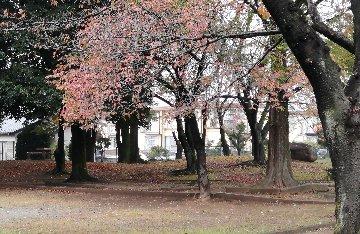 公園IMG_20201108_110435
